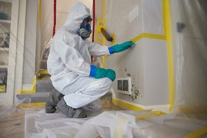 Mold Removal in Morristown, NJ